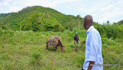 PHOTO: Haiti President Jovenel Moise and the Donkey