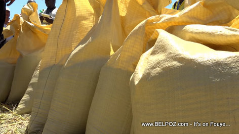 Bags of Haitian rices harvested with new machinery provided by President Jovenel Moise